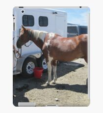 paint horse iPad Case/Skin