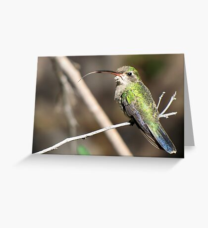 Hummingbird ~ Broad-billed (Female)  Greeting Card