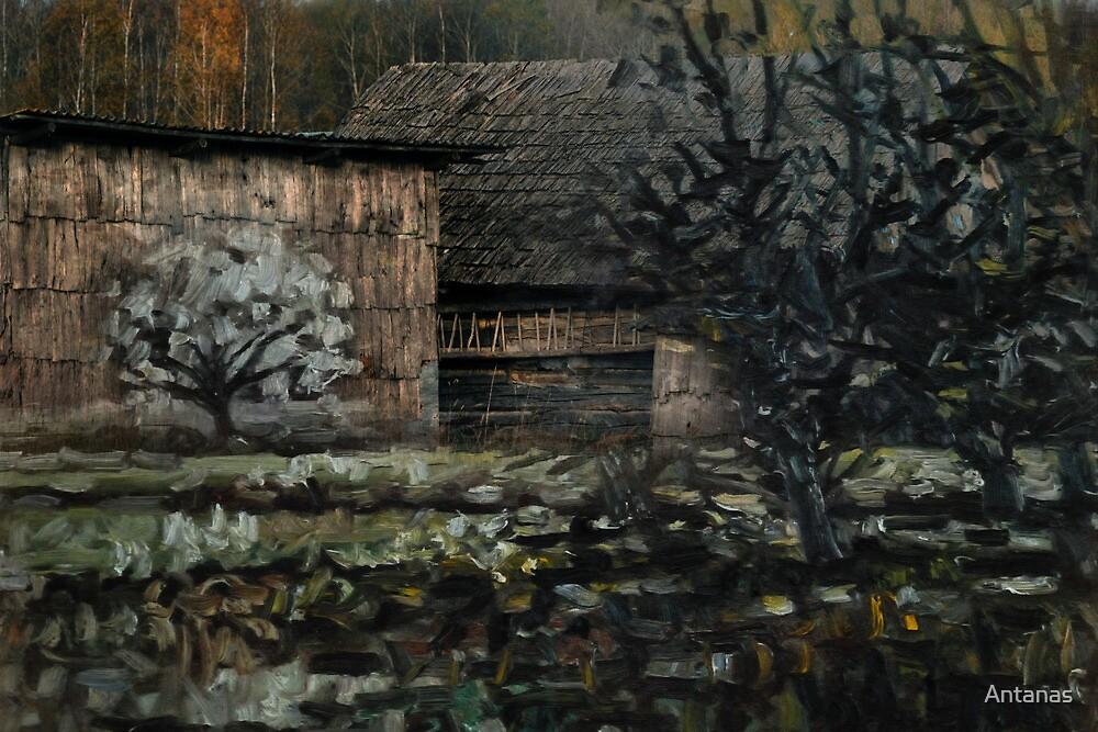 Homestead by Antanas