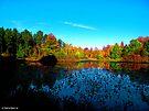 Shades of Autumn by Marcia Rubin