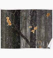 Snowing in the Woods, Dunrobin Ontario Poster