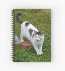 I Guess I Have A New Cat?! Spiral Notebook