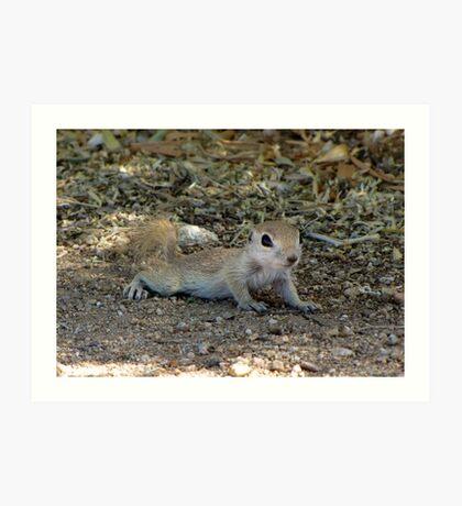 Round-tailed Ground Squirrel ~ Baby II Art Print