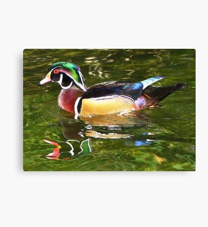 Wood Duck ~ Male Canvas Print
