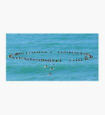 Andy Irons Memorial Paddle Out, Bells Beach 6 Nov Photographic Print