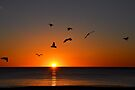 Fly by at Sunset by Helen Vercoe