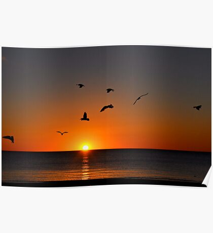 Fly by at Sunset Poster