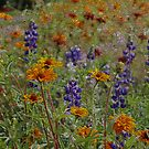 Wildflowers by Chappy