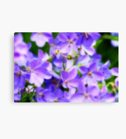 Lavender Beauties Canvas Print