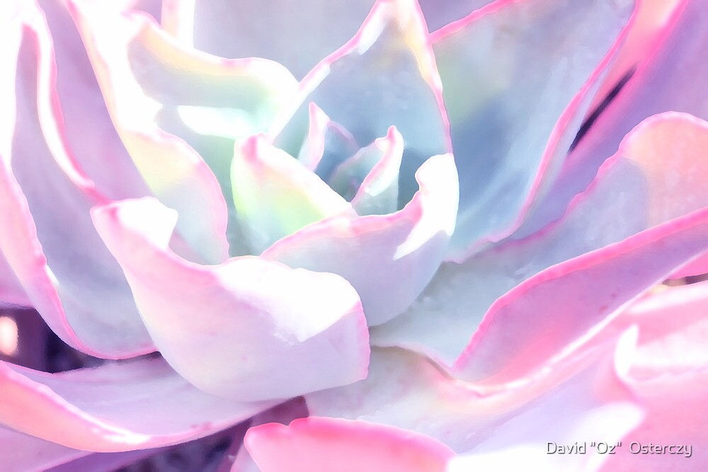 "Pastel Petals by David ""Oz""  Osterczy"