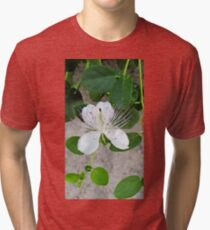 White flower of capers growing on a wall Tri-blend T-Shirt