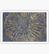 Pyritized Ammonite Sticker