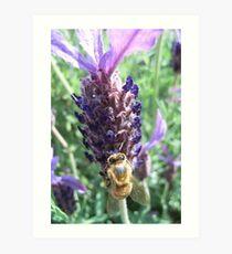 a bee gathers nectar... Art Print