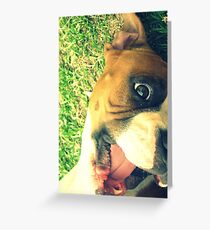 Happy Boxer Greeting Card