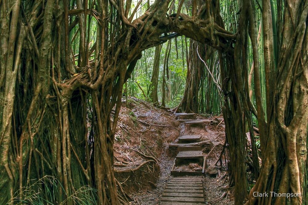 Banyan Tree by Clark Thompson
