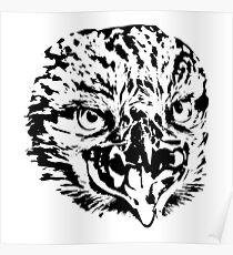 Eagle head predators Poster