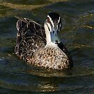 Just Ducky by Rick Playle