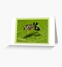 super fly Greeting Card