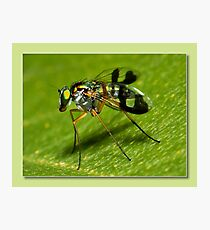 super fly Photographic Print