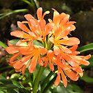 Orange flowers by lilleesa78
