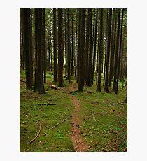 Faerie Forest, Austria 2015 Photographic Print