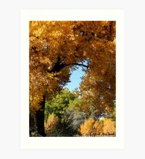 Colors of the Bosque Art Print
