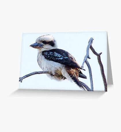 Kookaburra  Greeting Card