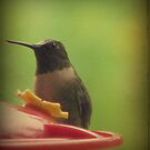 Portrait of a Hummingbird by DottieDees