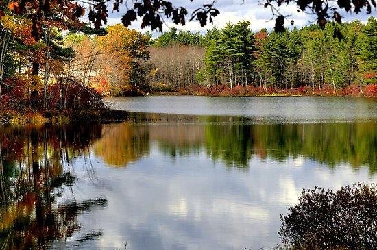 Reflections of the Seasons by Monica M. Scanlan