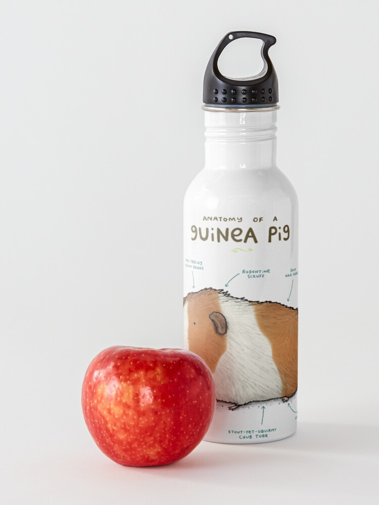 Alternate view of Anatomy of a Guinea Pig Water Bottle