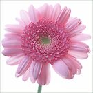 Pretty In Pink by audah