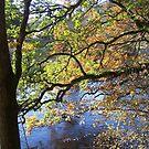 dappled golden foliage o'er the Tweed by mysticcatnip
