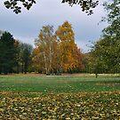 Tiergarten by metronomad