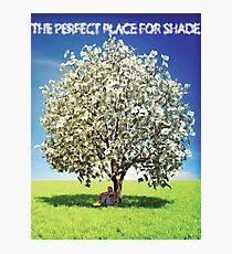 Money Trees is the perfect place for shade Photographic Print