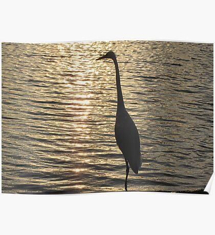 Great White Egret ~ Silhouette  Poster