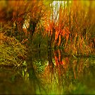 Early spring  polish Galicja . by Brown Sugar . Views 350. favs (5) . Thank you :) by © Andrzej Goszcz,M.D. Ph.D