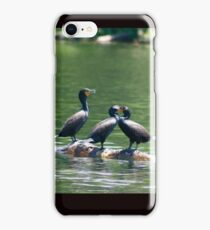 Three Double-crested Cormorants iPhone Case/Skin