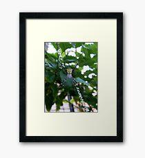 Maui Orb Spider Framed Print