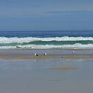 Seemöwen auf Tolsta Beach - Insel von Lewis von BlueMoonRose