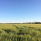 Fields of Barley by NinaJoan