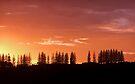 Sunrise Sentinels by Odille Esmonde-Morgan