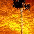 Golden sunrise by Tamara Travers