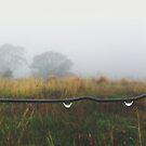 The Rain in Drops by NinaJoan
