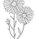 September Aster Birth Flower / Aster Drawing /September Birthday Gift by Laura Maxwell