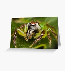 Male Green Jumping Spider Greeting Card