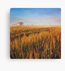sunrise over misty wheat field Canvas Print