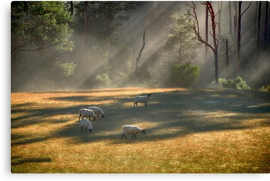 Sheep Safely Grazing by wildpatchouli
