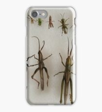Orthoptera iPhone Case/Skin