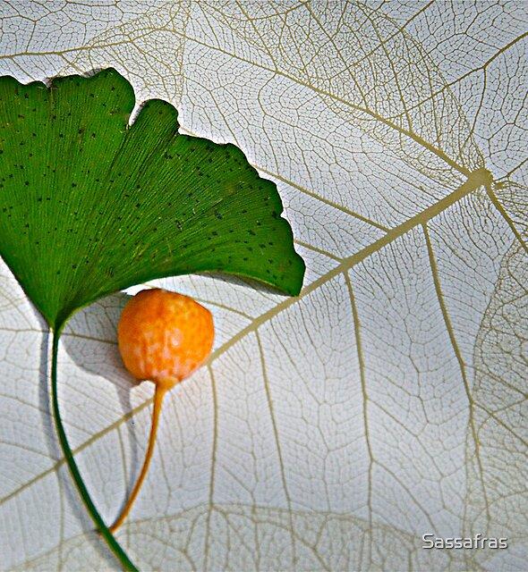 Gingko-leaf & fruit by Sassafras