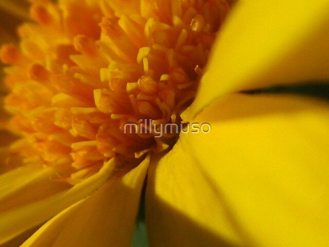 marigold yellow by millymuso